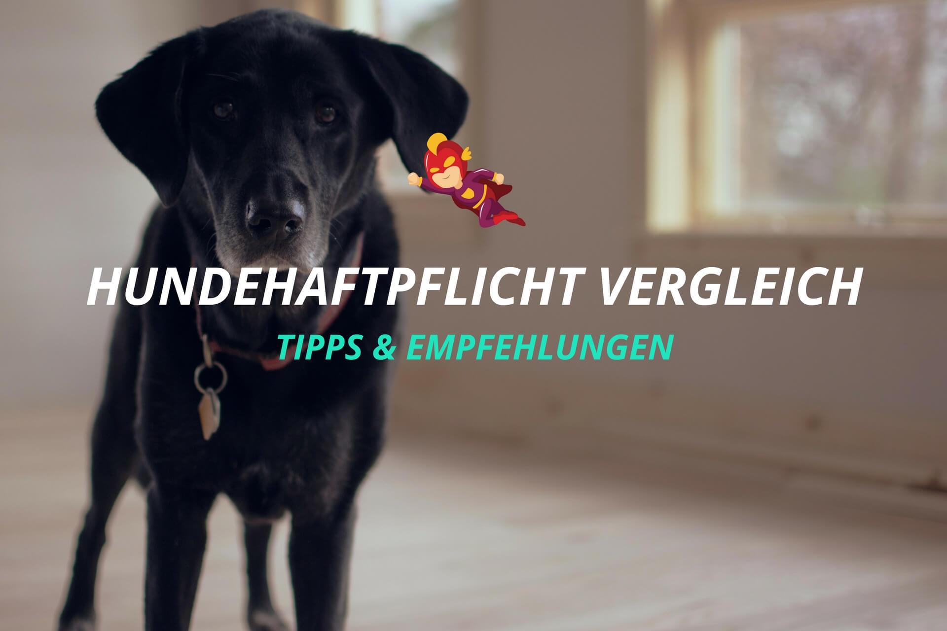 Hundehaftpflichtversicherung Vergleich - Finanzhelden.org