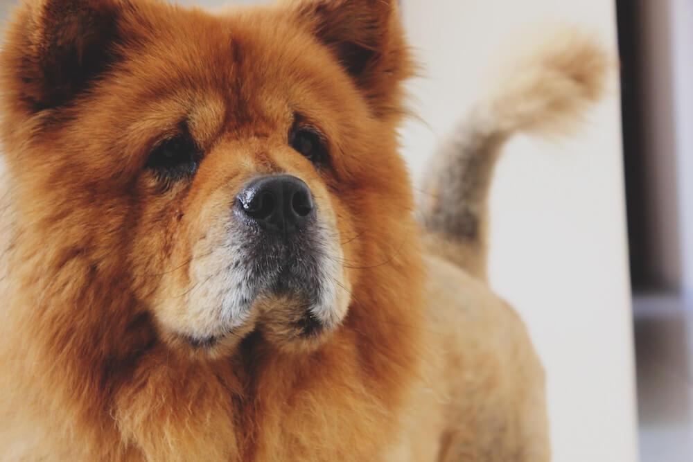 Hundehaftpflichtversicherung Vergleich & Ratgeber - Finanzhelden.org