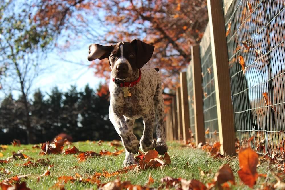 Hundehaftpflicht Vergleich - Auch die Hundeschule sollte mit rein!