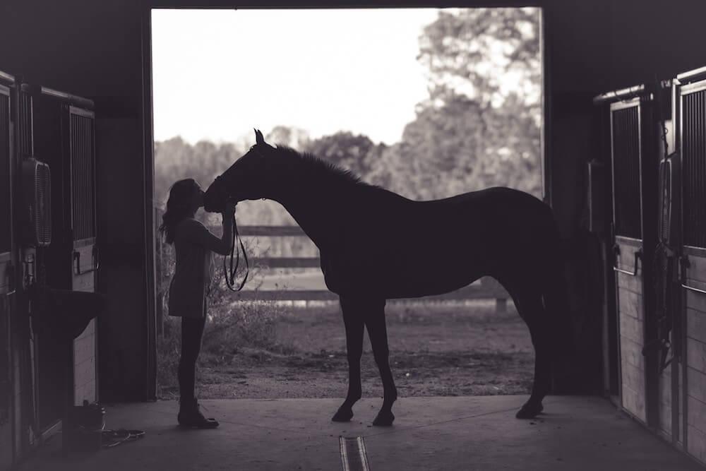 Pferdehaftpflicht Vergleich - Mietsachschäden sollten eingeschlossen sein